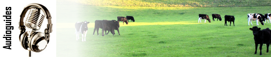header-cows.png